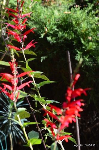 chez Caro,jardin automne 075.JPG