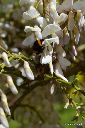 mésanges,escargots,ros. de banks,abeilles,Monpazier,Banes,Forêt 130.JPG