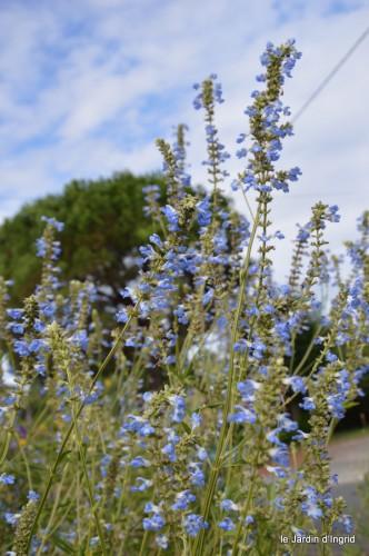 après la pluie,Tuillères,Mne Peirichou fleurs 088.JPG