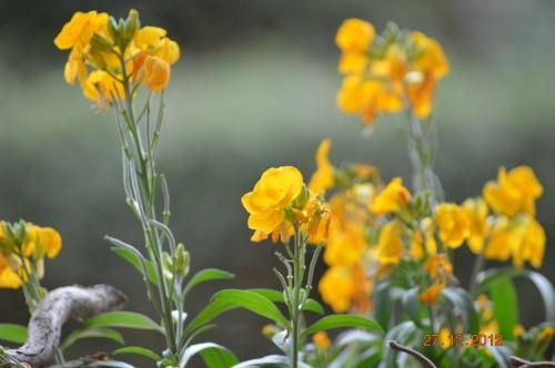 mésanges, nid frelons,fleurs décembre 043.JPG