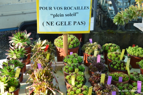 coquelicots,fête des fleurs Lalinde,fouleix,jardinage 048.JPG