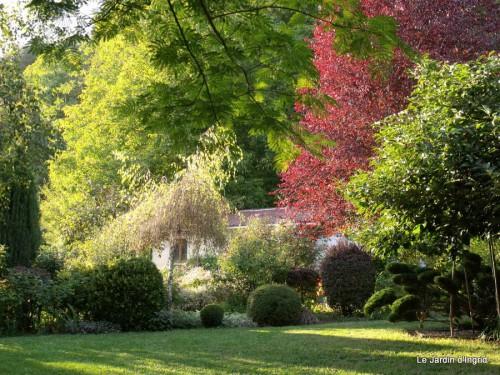 jardin 2010 2011 les plus belles 007.JPG