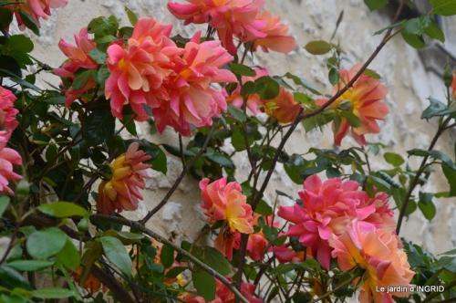 Colombier,Cadouin,jardin,roses,pluie 032.JPG