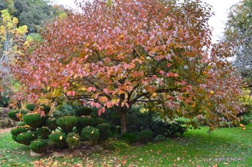 les arbres en automne,cabane 052.JPG