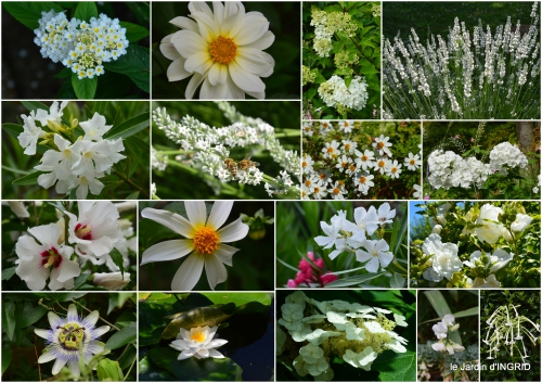 2016-07-04 hémérocalles,cygnes,dahlias,feu d'artifice,jardin,jardinières - Copie.jpg