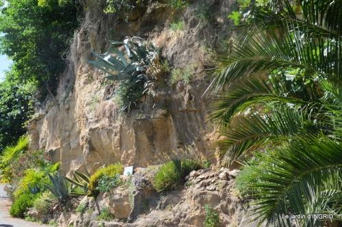 bambous Roque Gageac,jardin,bouquet 198.jpg