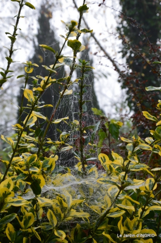brume,dentelles,fleurs,Noel Jardiland 026-001.JPG