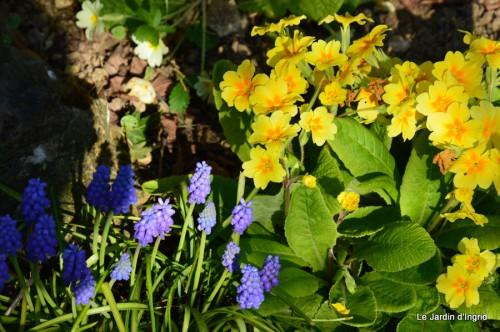 tour du jardin printemps 018.JPG