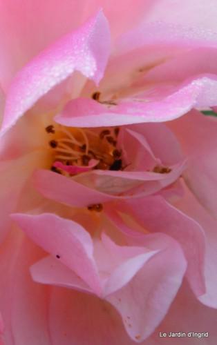 jardin,roses,cabane 007-001.JPG