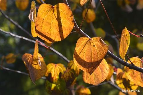 Jardin à l'automne 059.JPG