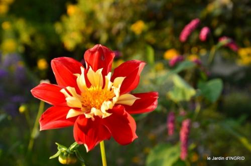 jardin Mme Perichou,grandes fleurs,bouquet,jardin 100.JPG