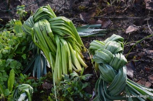 semis,bassin,tour du jardin 117.JPG