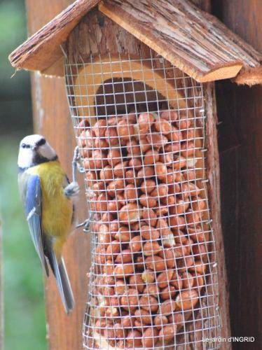 oiseaux cacaouettes gouttes,petits fruits 009.JPG