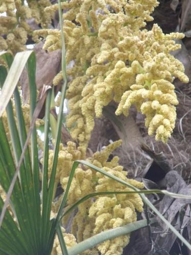 cytise,clématite,orchidée