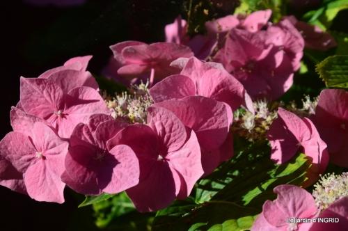 jachère,couleur,bouquet 014.JPG