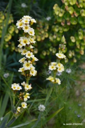 Roses du jardin,soirée Monpazier,puces Eymet 054.JPG