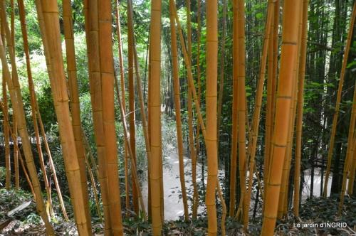 bambous Roque Gageac,jardin,bouquet 162.JPG