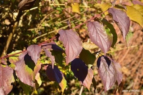 fin de l'automne,Lalinde,bouquet de l'avent 037.JPG