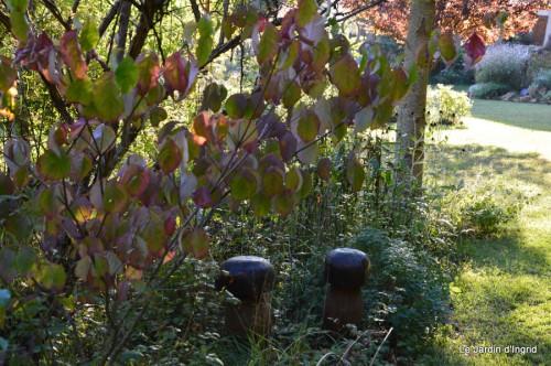 jardin début d'automne ,Sophie,rouge 010.JPG