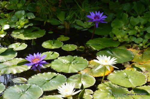 les jardins d'eau de Carsac 146.JPG