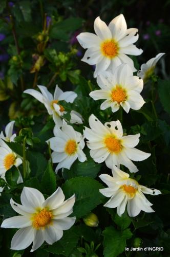 jardin Mme Perichou,grandes fleurs,bouquet,jardin 101.JPG