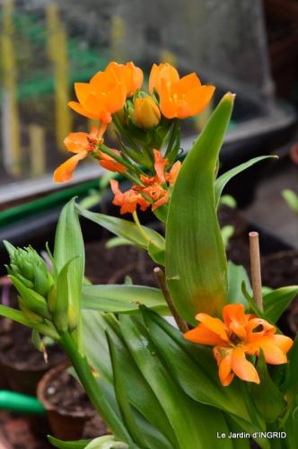 jardin (3 semaine de mars) 047.JPG