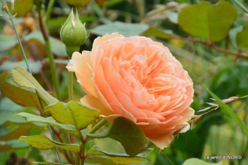 sentier des cygnes,hémérocalles,bouquet,jardin 104.JPG