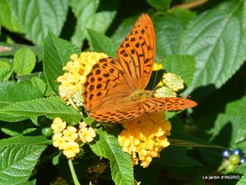 jardin,papillons,anniversaire d'Ines,bricolage 112.JPG