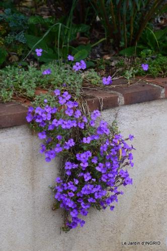 jardin (3 semaine de mars) 106.JPG