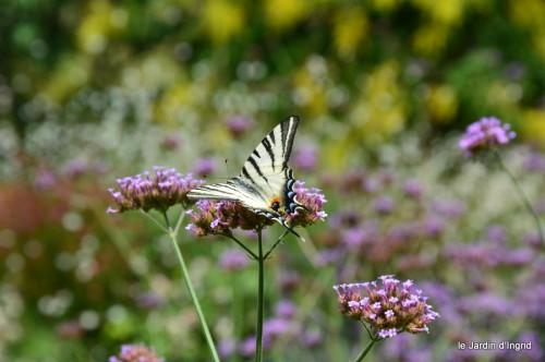 datura,papillon,Meyrals,déco Bergerac,bignonia 037.JPG