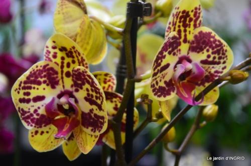 Orchidées,Noel jardiland,lever du soleil 040.JPG