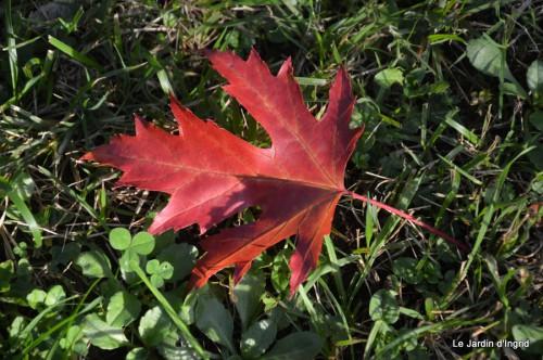 sauges,plectanthrus,Romane,canal,manthe r.,automne 012.JPG