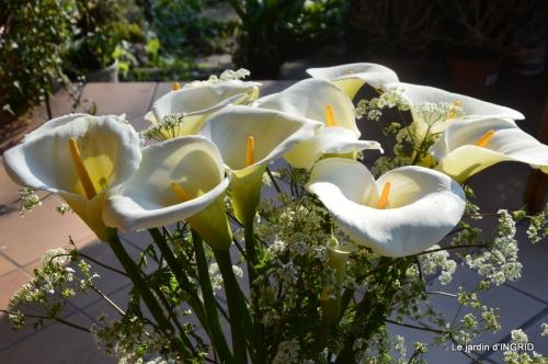 jardin confiné ,osier,magnolia jaune 079.JPG
