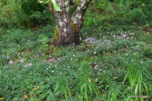asters,bouquets,jardin de Lilianne 026.JPG