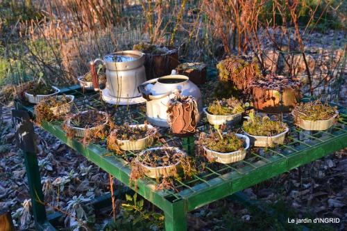 première gelée,compositions florales à garder,jardin 025.JPG