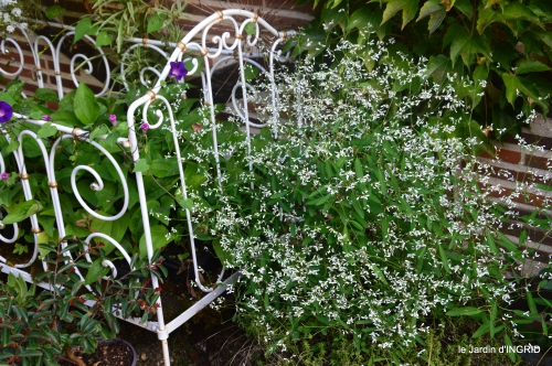 Fleurettes,Dordogne,jardin 110.JPG