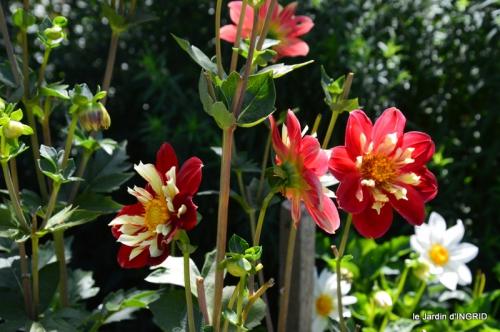 confiture,bouquet,petit jardin 018.JPG