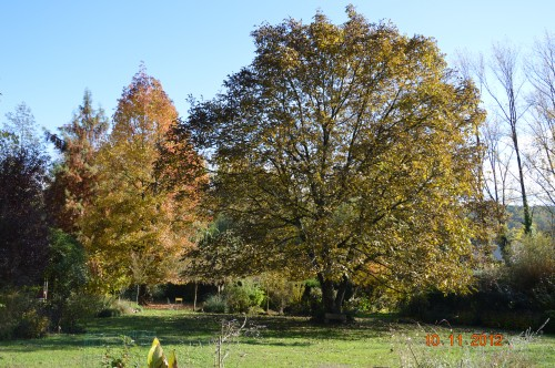 petit érable,le canal et lejardin àl'automne 028.JPG