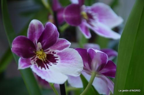 canal,jardin,Mombazillac,bonzais,orchidées 194.JPG