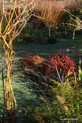 fleurs de janvier ,coucher de soleil,compo de tulipes 025.JPG