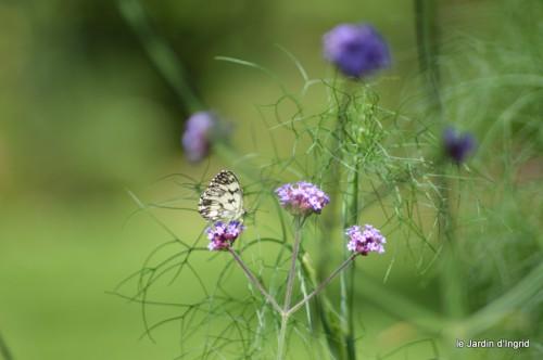 coeur des fleurs,papillons,libellules 162.JPG