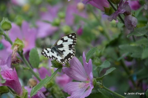 jardin matin,Romane ,nicky 035.JPG