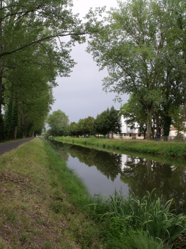 ipomée,lagestromia,Arya,canal,cygnes 056.JPG