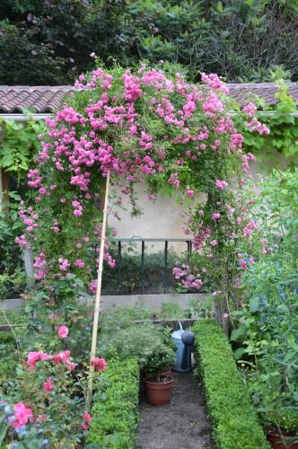 jardin,potager,roses,sauges 007.JPG