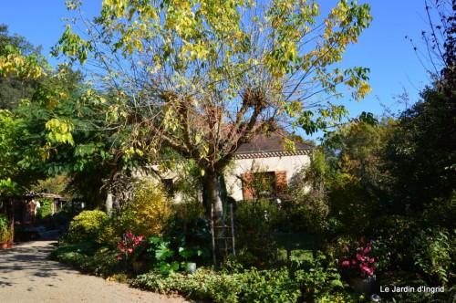 ménage automne,plectanthrus,feuillages 030.JPG
