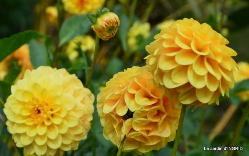 jardin ,bouquet 080.JPG