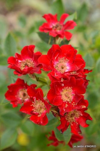 jardin juin,cabane,bouquet 112.JPG