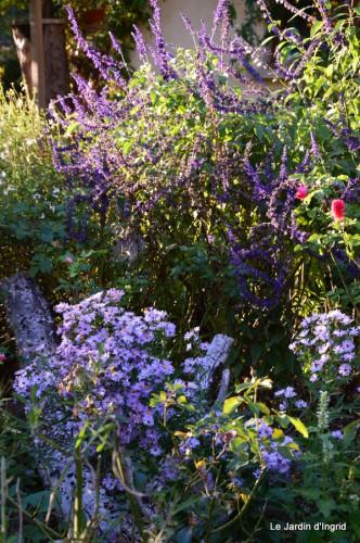jardin début d'automne ,Sophie,rouge 037.JPG