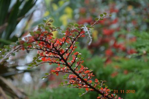 arbres,vues,kaki,kiwi,fleurettes,en fâce 048.JPG