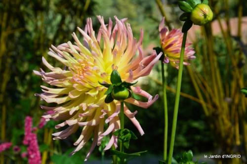 jardin Mme Perichou,grandes fleurs,bouquet,jardin 059.JPG